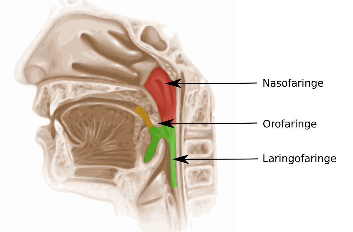 herpes and hpv metastatic cancer brain