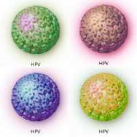 imagenes del virus del papiloma humano en la mujer