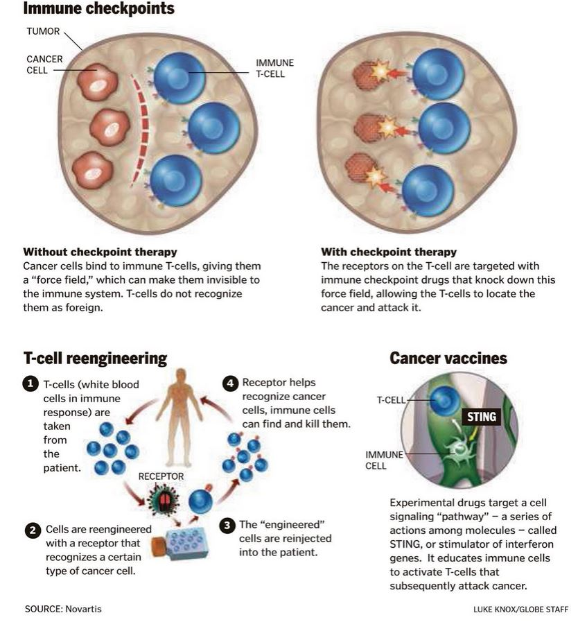 neuroendocrine cancer drugs