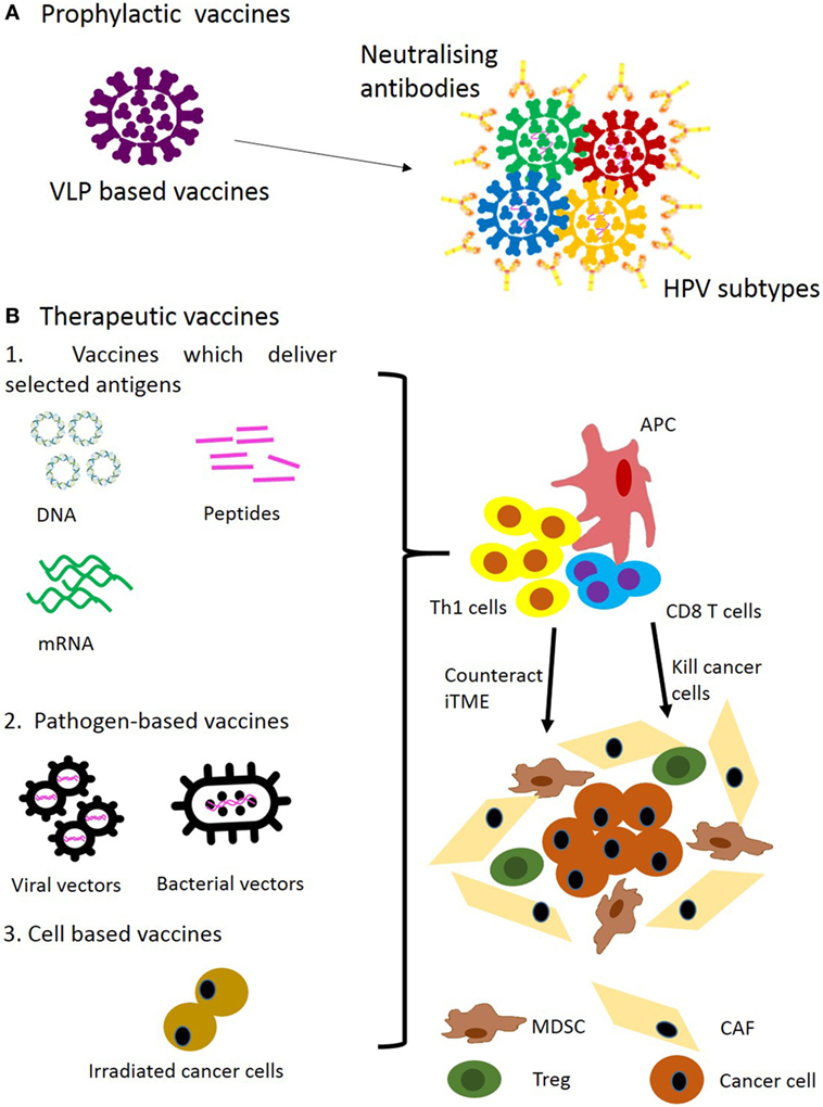 human papillomavirus vaccine cancer treatment papilloma virus cauze