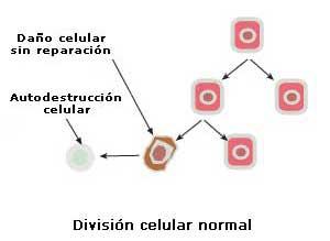 que es la oxiuriasis y sus sintomas cancer caused from hpv