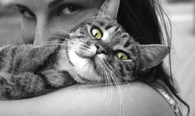 los gatos tienen oxiuros