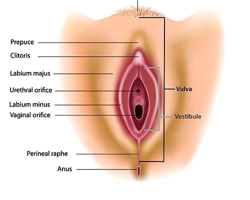 vestibular papillomatosis birth control cancerul bacterian al tomatelor