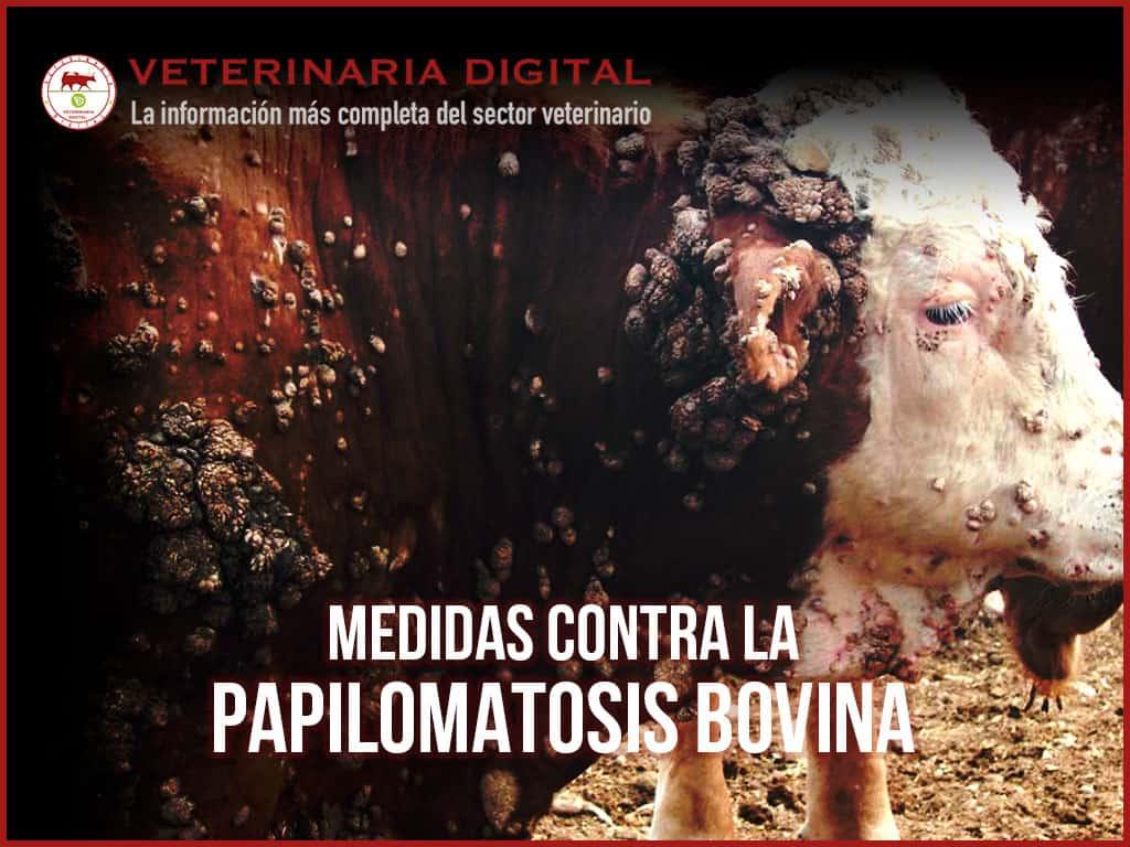 virus del papiloma bovino vacuna vacina hpv previne cancer de colo de utero
