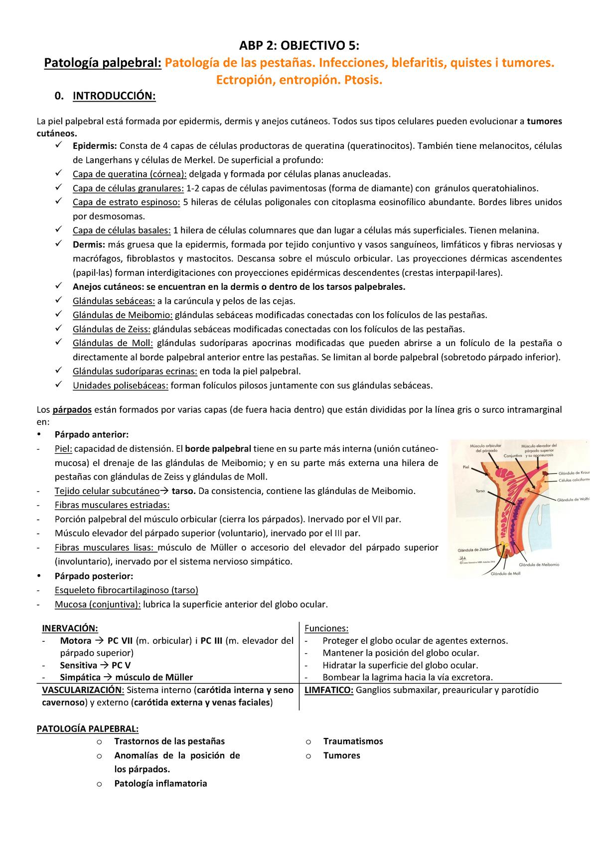 virus papiloma humano mujer sintomas