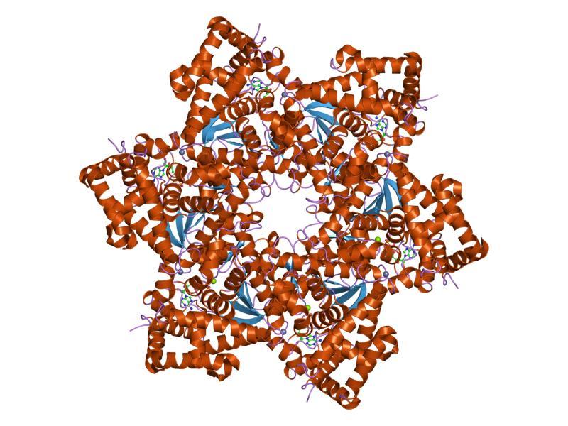 p16 virus del papiloma humano