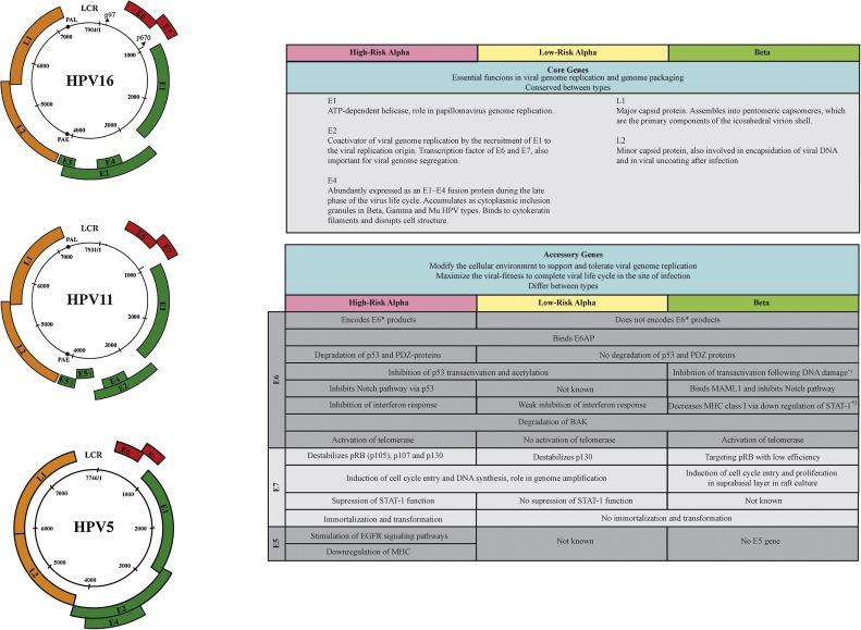 high risk papillomas peritoneal cancer research