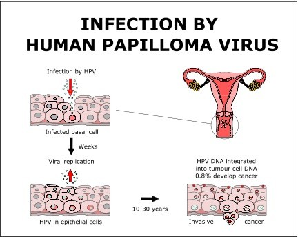 how do u get human papillomavirus