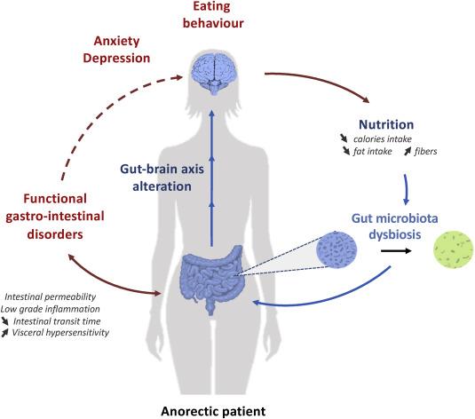 dysbiosis in functional bowel disorders