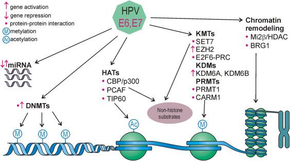 hpv e contagio