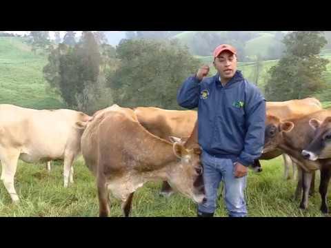 tratamiento contra papilomatosis bovina