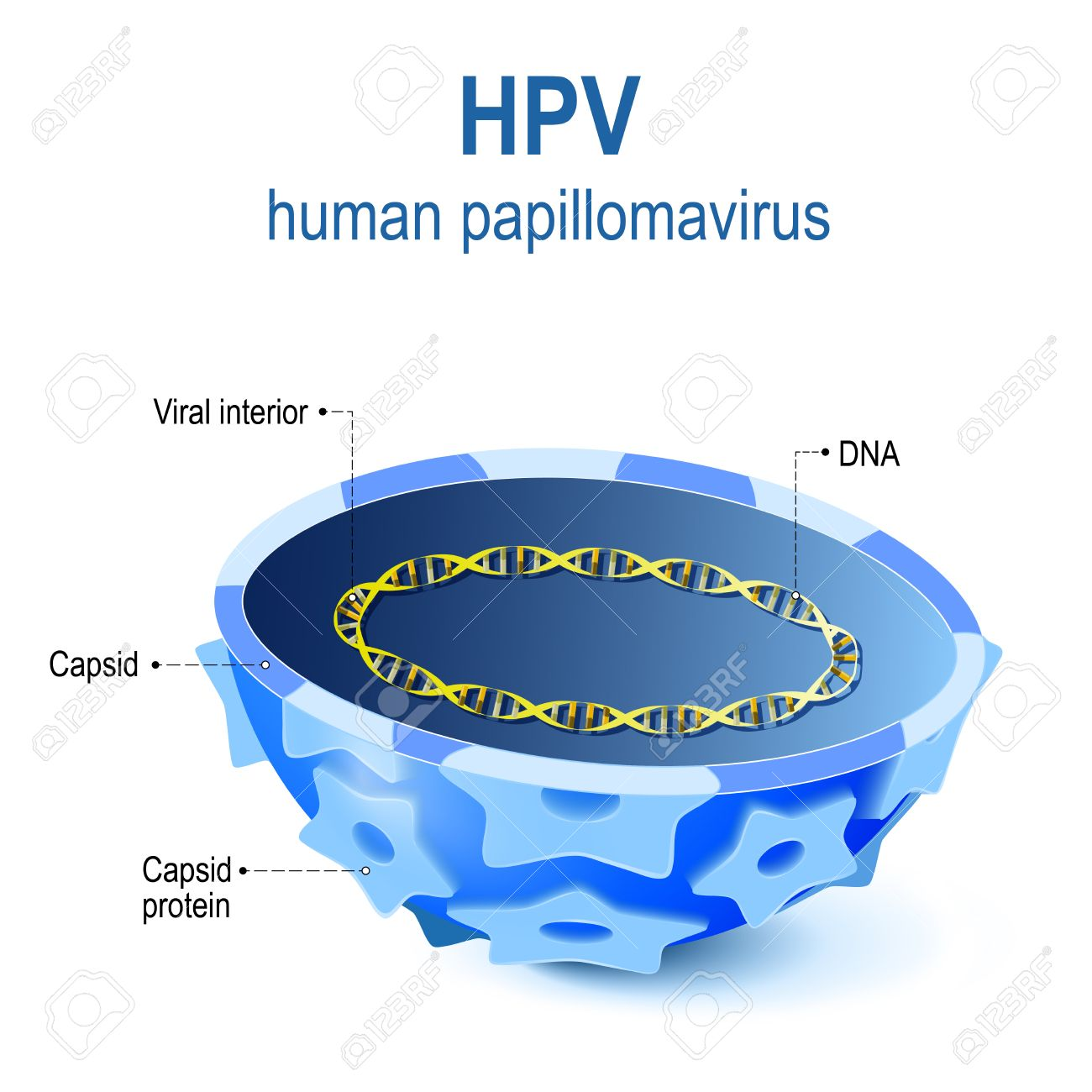 paraziti kod macaka virus papiloma humano sin tener relaciones