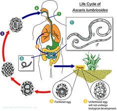 papilloma virus e analisi del sangue cancer testicular netratat