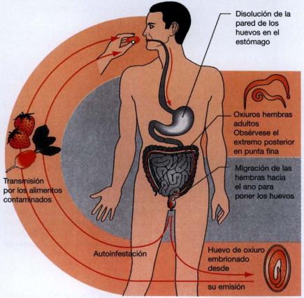 raie la om tratament paraziti intestinali medicamentos