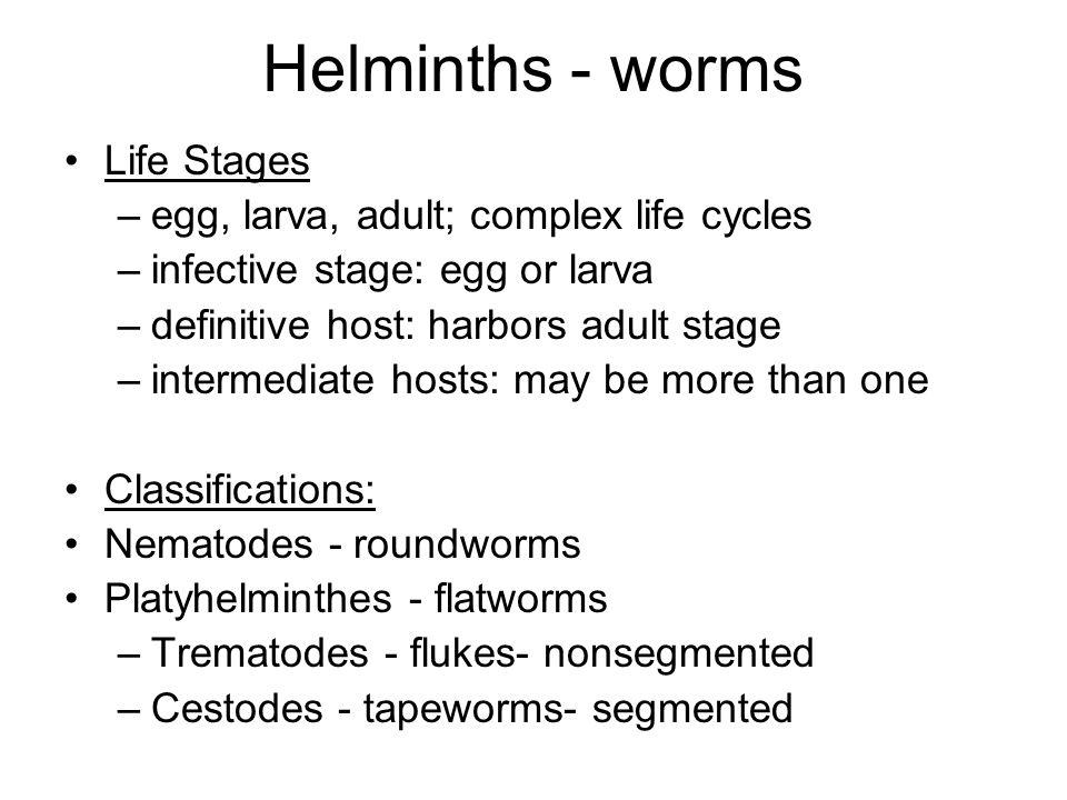 schistosomiasis who