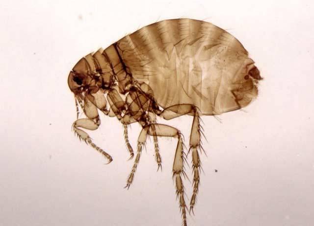 bakterije i paraziti u stolici papillomavirus c quoi