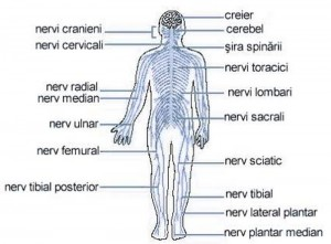 papillomatosis in airway