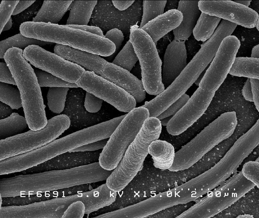 bacterii nocive