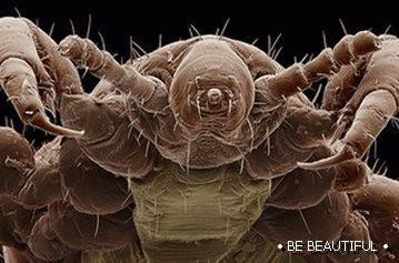paraziti v ludskom tele traitement pour le papillomavirus chez lhomme