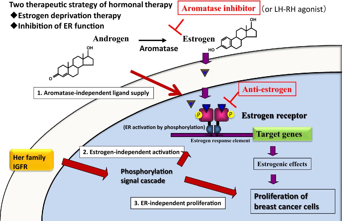 cancere hormonale enterobius vermicularis factores de riesgo
