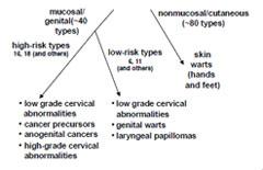papilloma virus e bocca