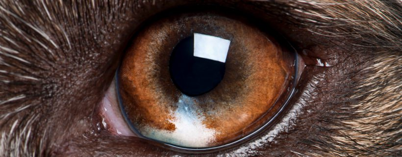 Urgente Oculare