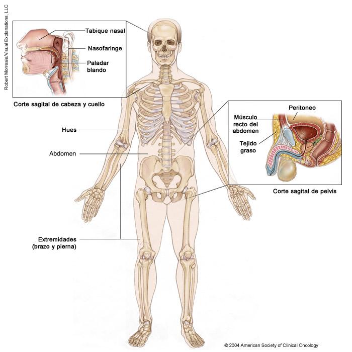 ciuperci nebune cancer abdominal cid