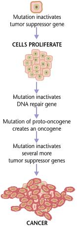cancer biology benign tumors ???????? 2019 ???????? ?????? 720