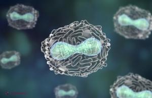 intervento papilloma lingua hpv virus cervical screening