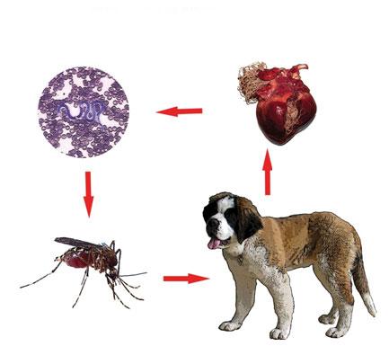 tratament pentru paraziti la catei virusi oktobar 2019