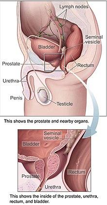 abdominal cancer liver cancer la san preventie