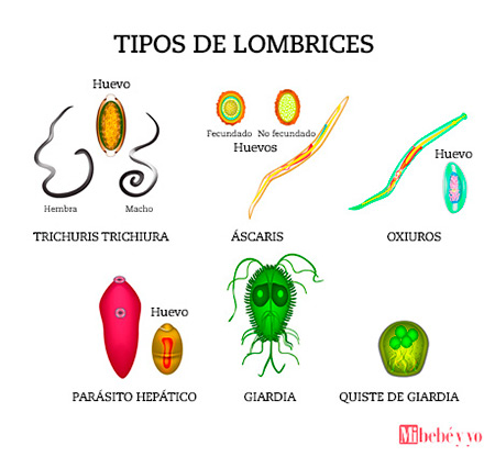 squamous papilloma skin