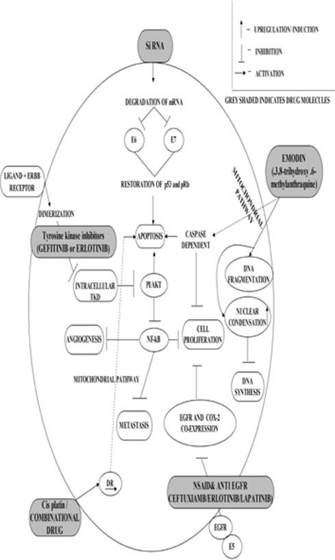 cervical cancer pathogenesis douleur uterus papillomavirus