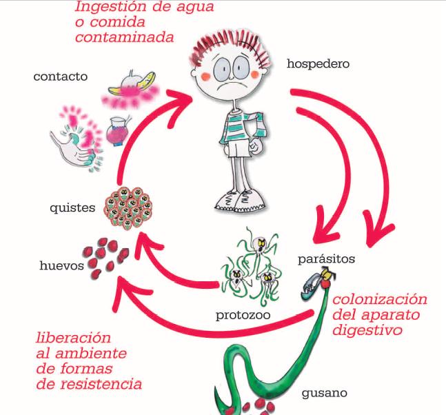oxiuros y bebes ulei de cocos pentru paraziti intestinali