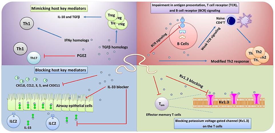 comment soigner papillomavirus homme