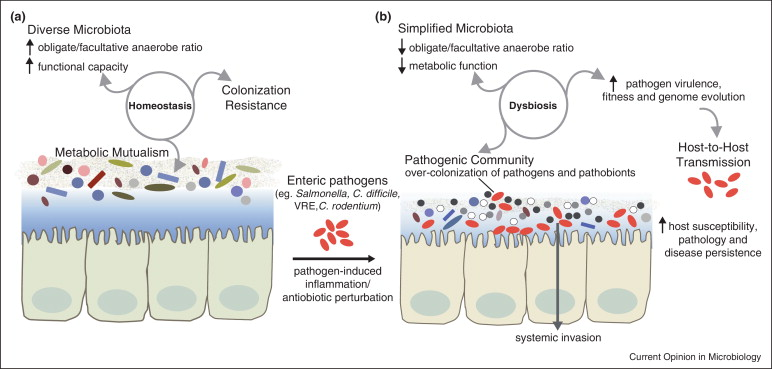 a dysbiosis definition papillomas effects