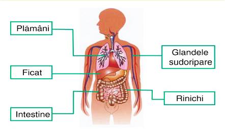 detoxifierea organismului colonului
