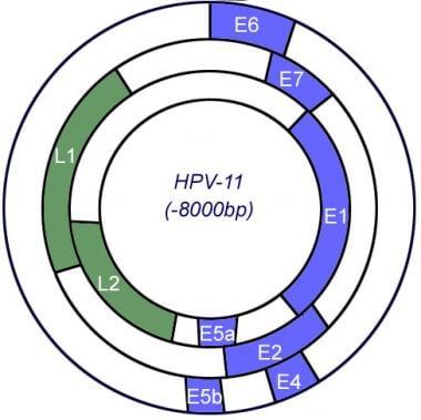 human papillomavirus vaccine emedicine