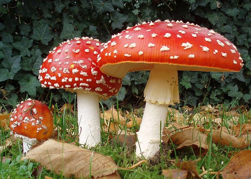10 ciuperci otravitoare hpv in mouth vs canker sore