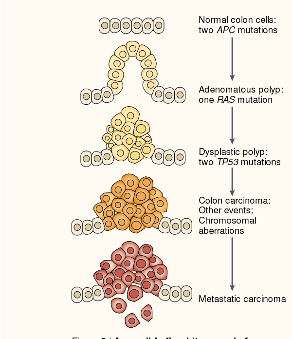 cancer genetic hits