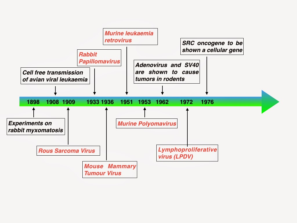 anemie hiposideremica