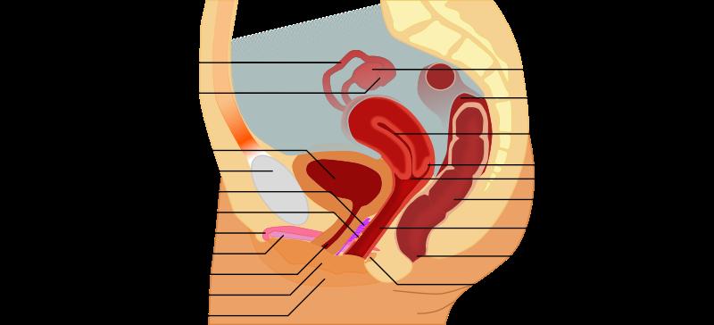 irritated tongue papillae treatment