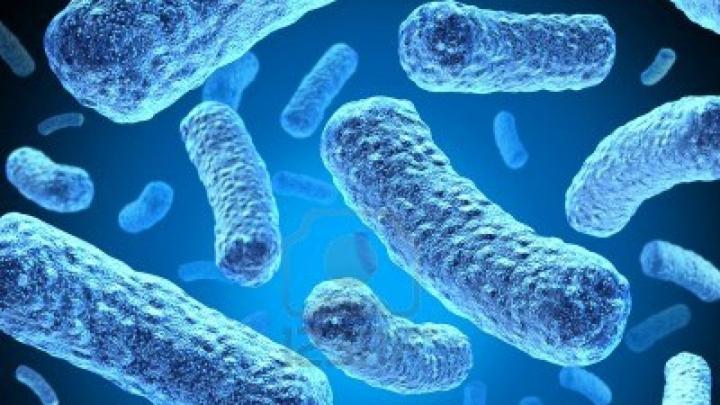 bacterie qui attaque le coeur