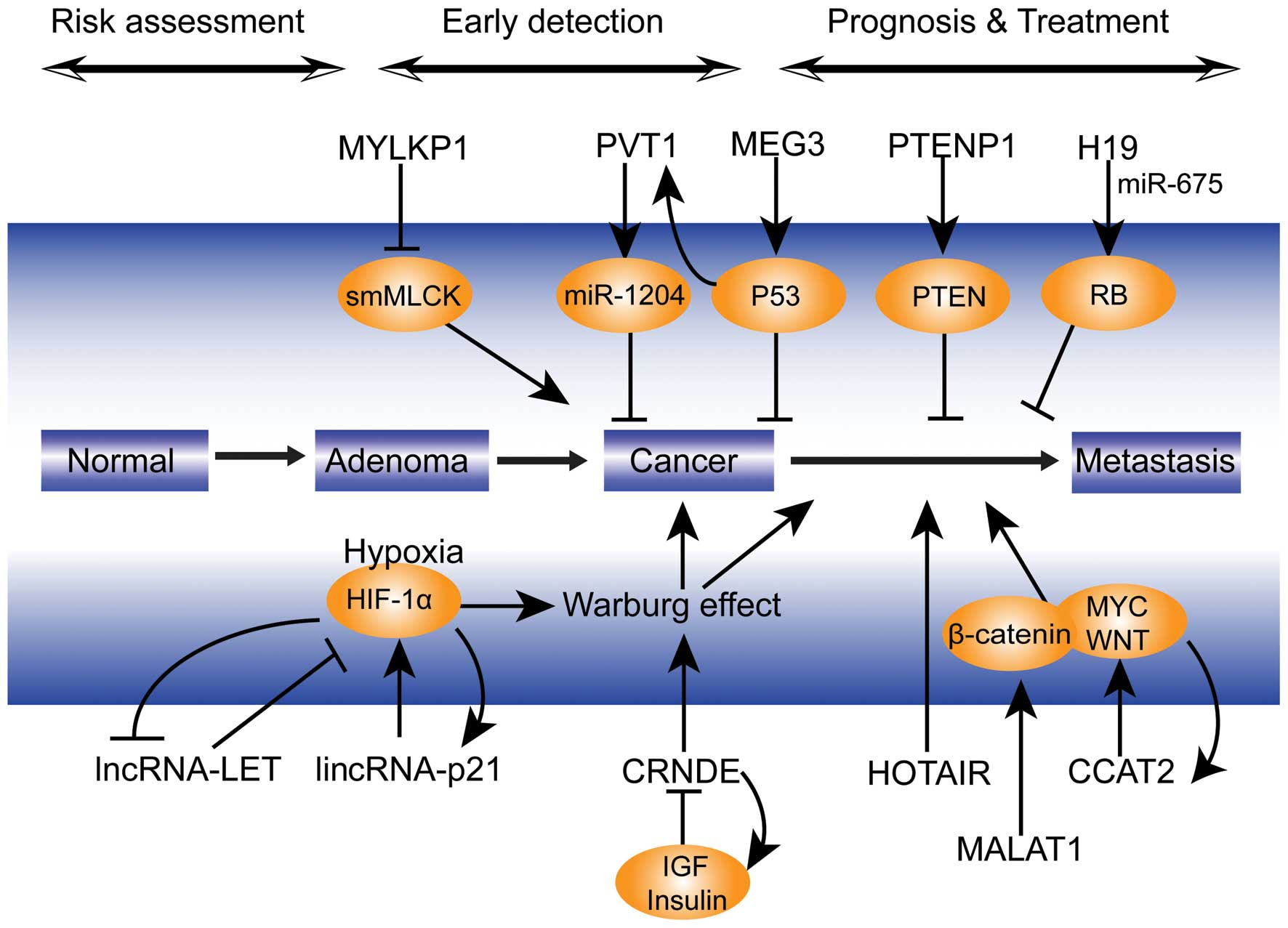 hpv-associated oropharyngeal cancer symptoms enterobiasis adalah