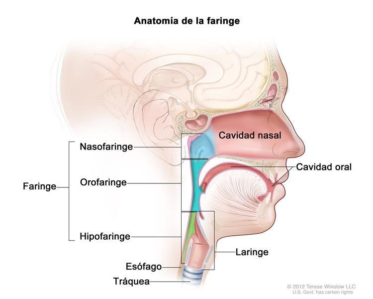 cancer de pancreas metastasis en el higado jos cenzura
