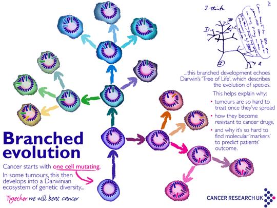 cancerul mamar si ovarian
