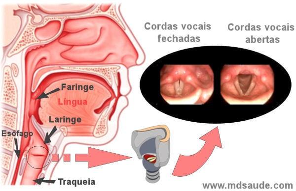 cancer faringe y laringe hpv virus what causes it