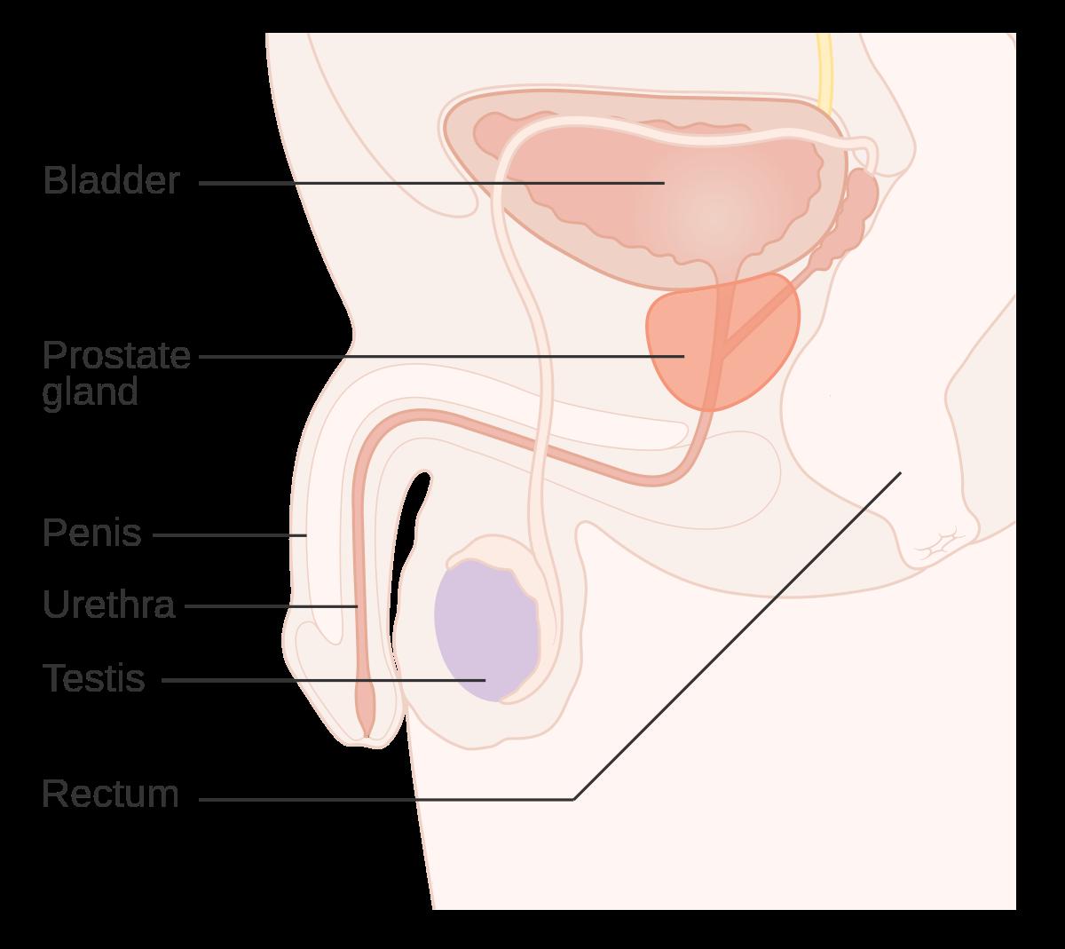 cancerul genital