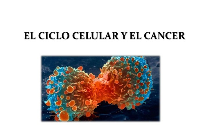 breast cancer genetic heterogeneity