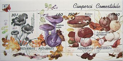 ciuperci nebune virus papiloma humano k es